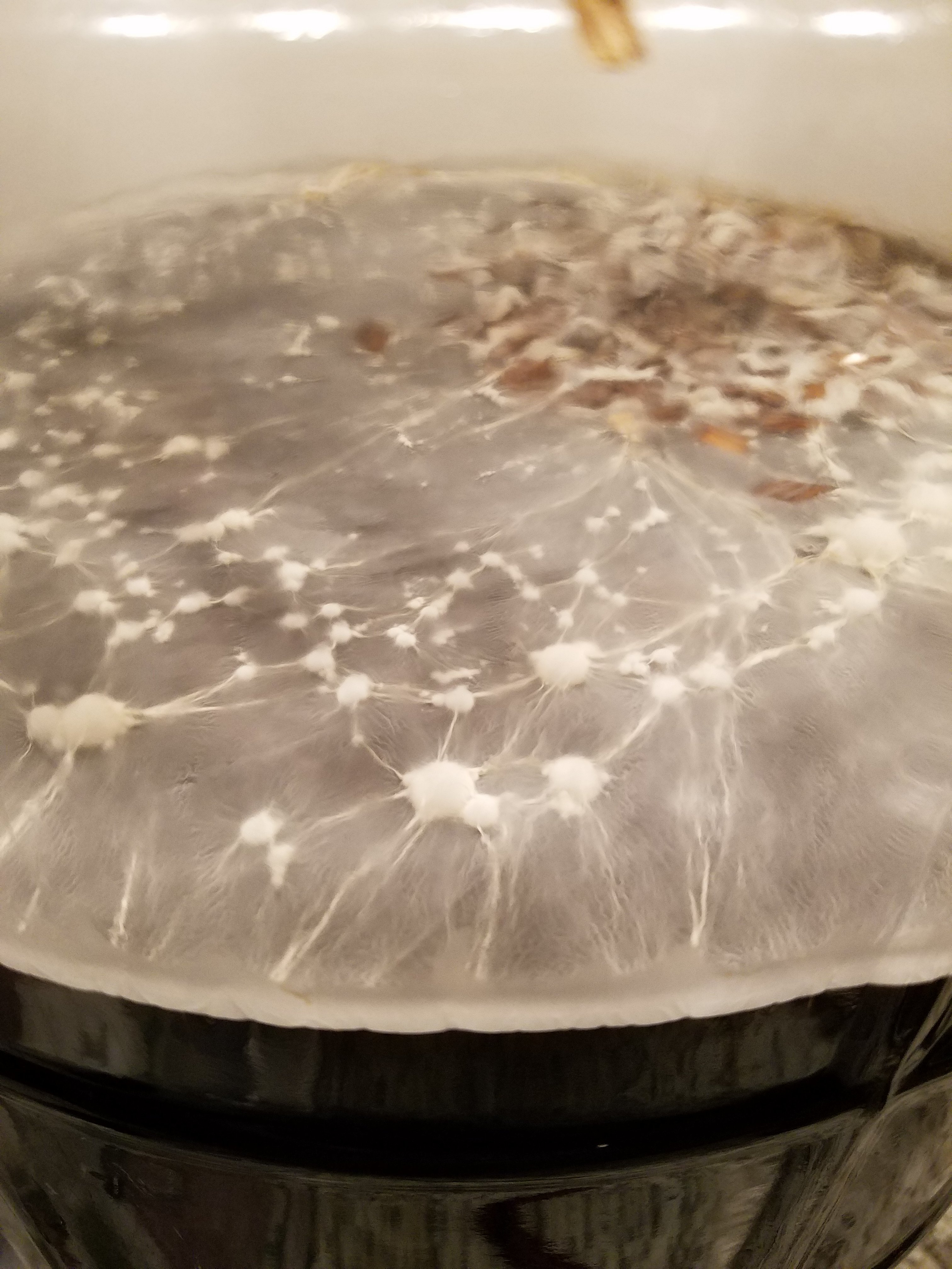 Pellicle Photo Collection | Page 63 | HomeBrewTalk.com - Beer, Wine, Mead,  & Cider Brewing Discussion Community.