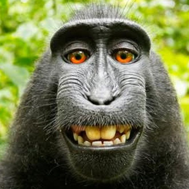 _85730600_monkey2.jpg