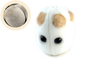 bacteria-yeast.jpg