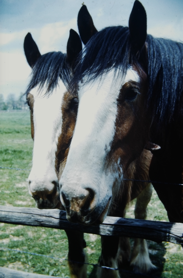 Clydesdales 1967.png