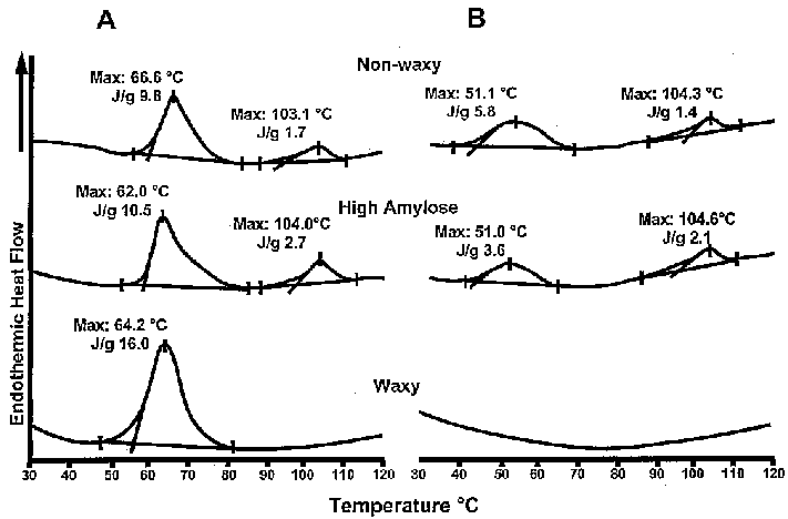 Differential-scanning-calorimetry-thermograms-of-prime-starch-from-nonwaxy-high-amylose.png