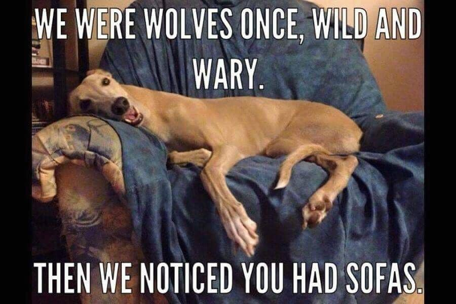 DogsWolvesSofas.jpg