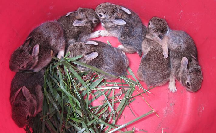 eight bunnies.png