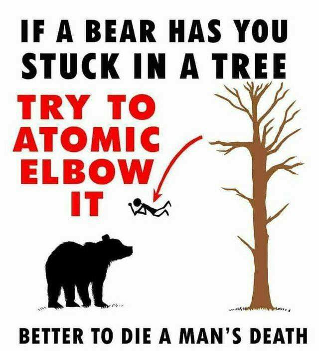 If A Bear Has You Stuck In A Tree.jpg