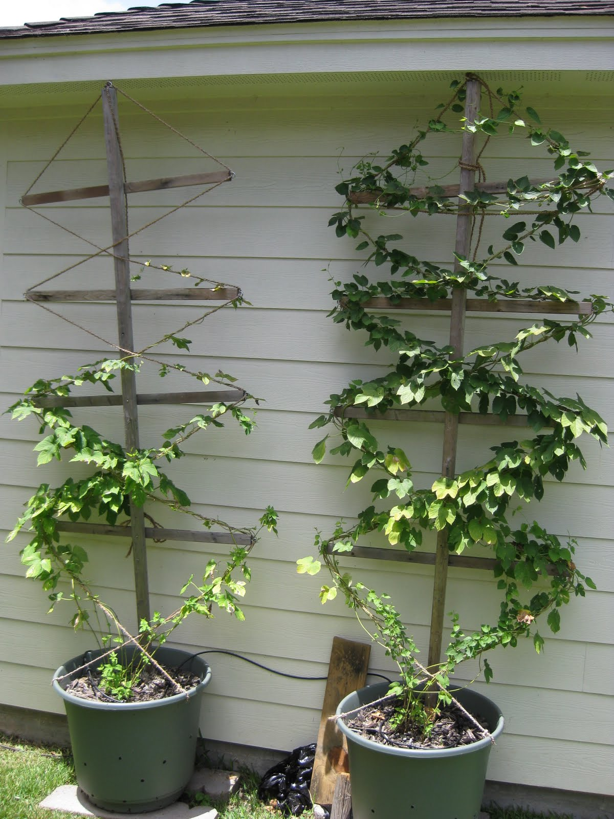 how to make a trellis for hops