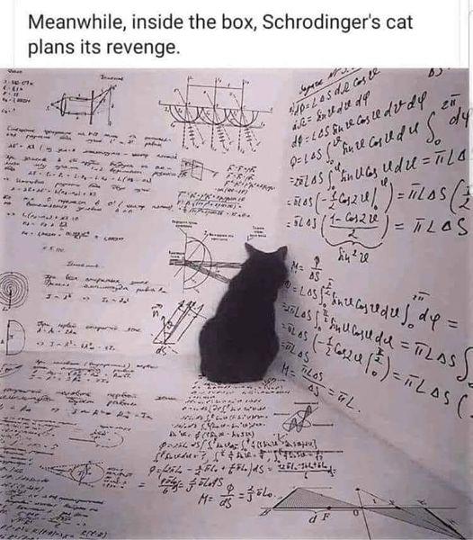 Schroedingers Cat.jpg