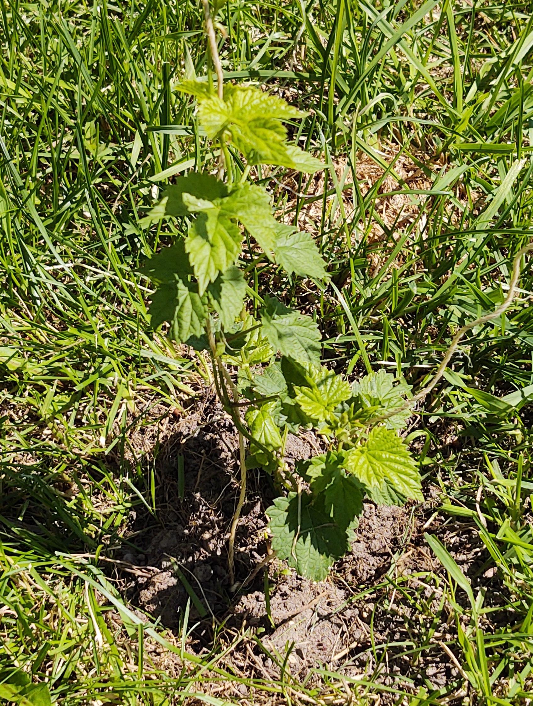 Seedling 2 06142020.jpg