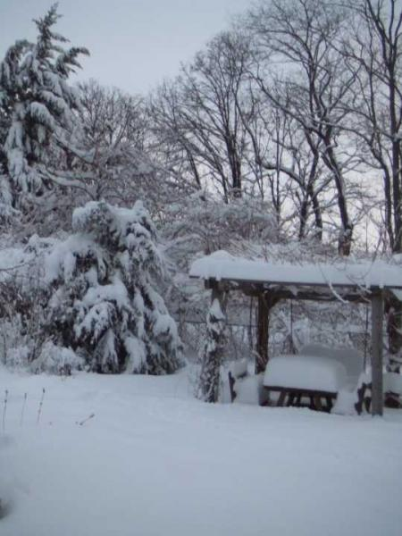 Snow_110127_03lr.jpg