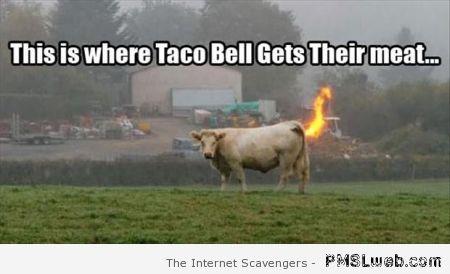 Taco Bell Meat.jpg