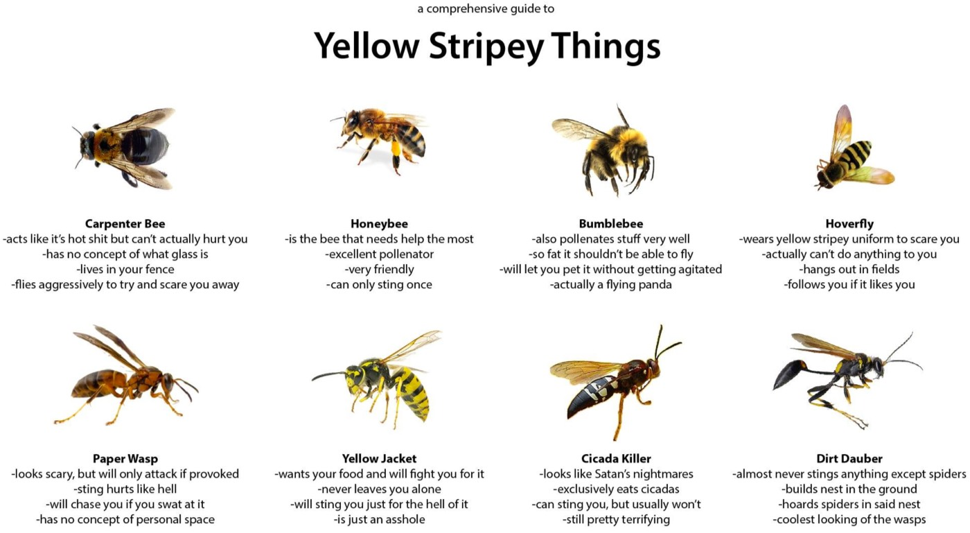 yellow-stripey-things.jpg